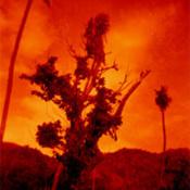 http://scholar.library.miami.edu/caribbeanvisual/sites/default/files/dj_g2_tree2_02.jpg
